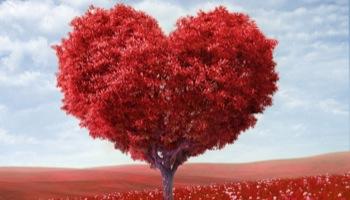 Monika: miłość prawdziwa
