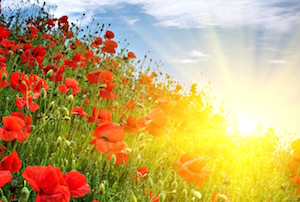 Poppies-Meadow-Sun-Rays-Summer
